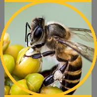 ハチの被害でお悩みの方へ
