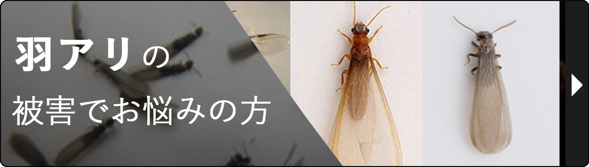 羽アリの被害でお悩みの方