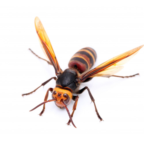 ハチの駆除について