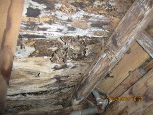 シロアリの床下被害 イメージ1