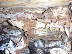 シロアリの床下被害 イメージ2