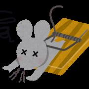 家ネズミの生態とネズミによる被害