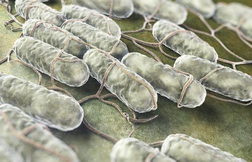 サルモネラ菌 イメージ