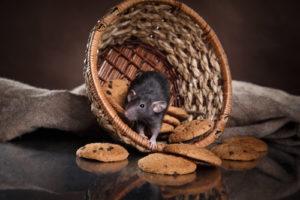 ネズミ被害でお困りの場合は一度ご連絡ください!調査・見積無料!