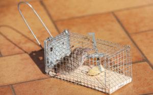 家に侵入した嫌なネズミ!防除方法について