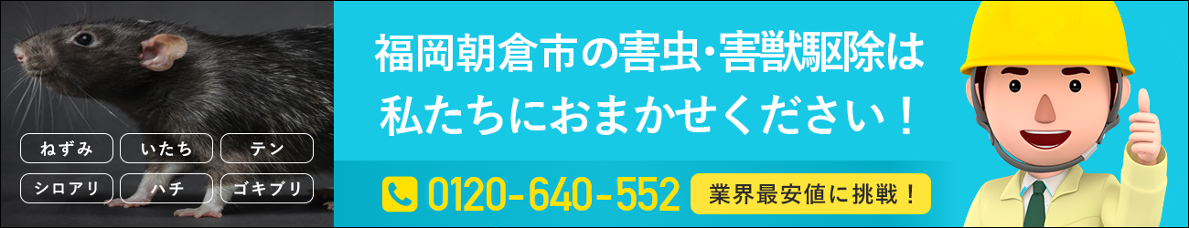 福岡県 朝倉市のシロアリ・イタチ・ハチの駆除は私たちにおまかせください!