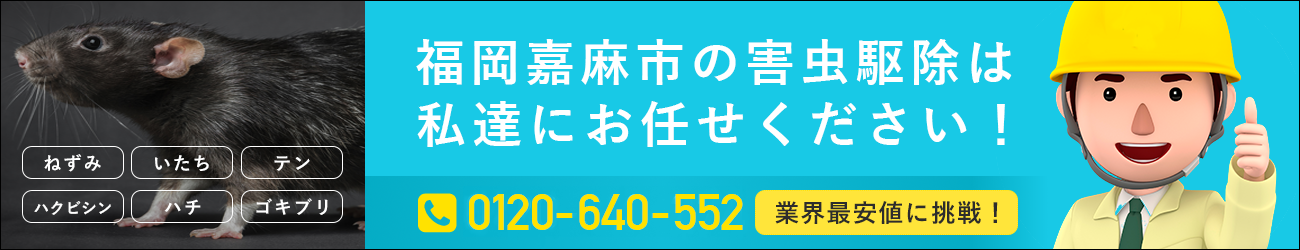 福岡県 嘉麻市のシロアリ・イタチ・ハチの駆除は私たちにおまかせください!