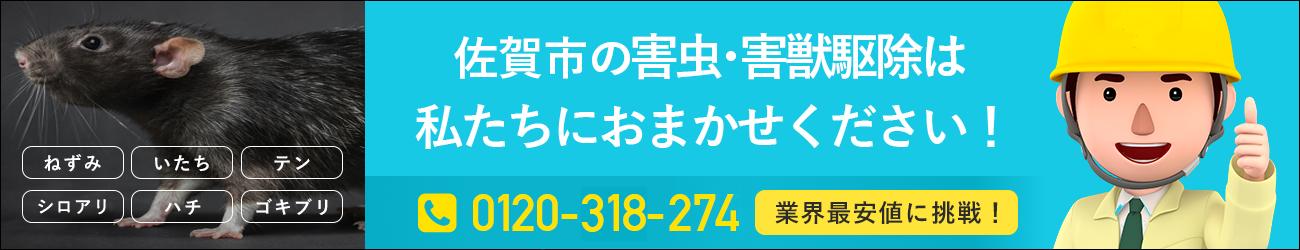 佐賀県 佐賀市のシロアリ・イタチ・ハチの駆除は私たちにおまかせください!
