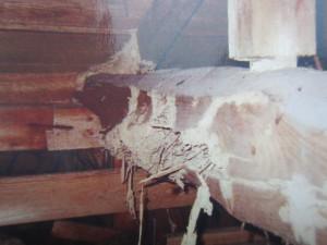 シロアリの被害 イメージ2